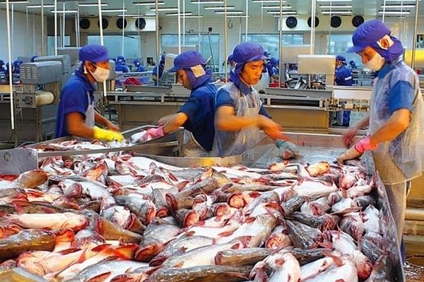 Xuất khẩu cá tra sang EU có 8 tháng giảm sâu trước khi chờ cơ hội từ EVFTA