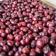 Xuất khẩu lô cà phê đầu tiên sang EU theo EVFTA