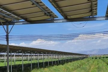 Điện mặt trời trang trại nông nghiệp được gỡ khó