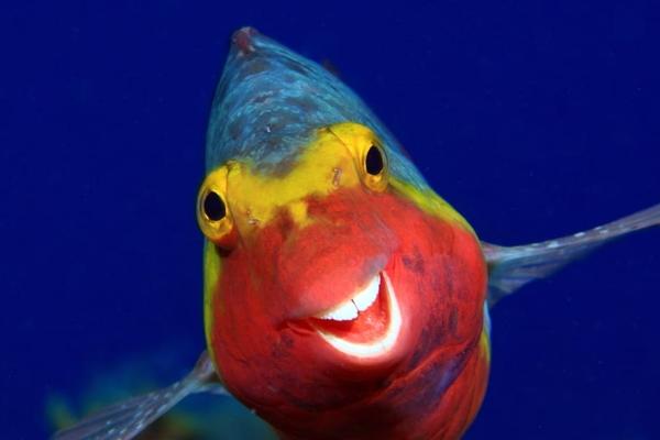 Khoảnh khắc hài hước của động vật hoang dã qua ống kính nhiếp ảnh gia