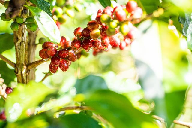 SHIN Cà Phê cung cấp trọn gói từ hạt cà phê thành phẩm cho đến quy trình đóng gói, in ấn.
