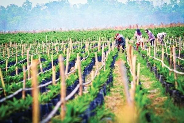 Hưng Thắng Lợi Gia Lai bán gần 50 triệu cổ phiếu HNG