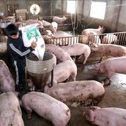 Chiến lược ngành chăn nuôi: 30% sản phẩm được chế biến sâu vào 2045