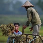 24 thương nhân không xuất khẩu gạo có thể bị thu hồi giấy phép