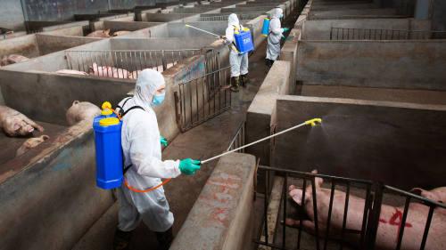 Giá thịt lợn tại Trung Quốc tăng chậm nhất một năm