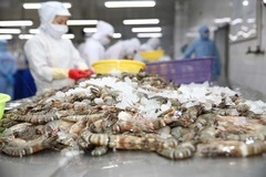 Mỹ kết luận Minh Phú sai phạm liên quan xuất khẩu tôm nguồn gốc Ấn Độ