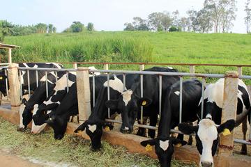 Nhiều doanh nghiệp sữa lãi lớn trong quý III