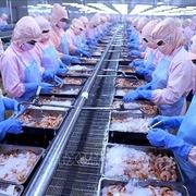 Lãi 9 tháng công ty mẹ Minh Phú giảm 14%