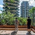 <p> Không có bất kỳ công nhân nào được thuê để chăm sóc cây xanh nên 8 tòa tháp đã bị chính cây cối bao phủ và bị muỗi xâm nhập.</p>