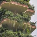 <p> Mỗi ban công được dành không gian để trồng cây nhưng hiện tại đám cây đã mọc um tùm, rủ xuống cả tầng dưới.</p>