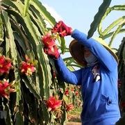 Thúc đẩy xuất khẩu nông sản qua cộng đồng doanh nhân người Việt ở Mỹ