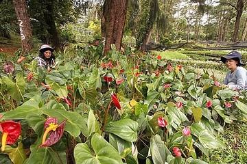 'Cơn sốt cây xanh' giữa mùa dịch ở Philippines