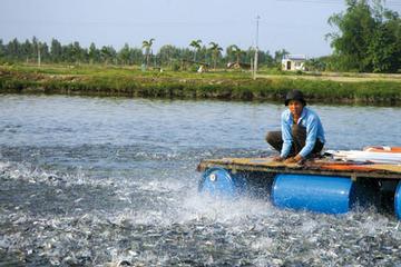 Doanh thu xuất khẩu tháng 10 của Vĩnh Hoàn đạt 735 tỷ đồng, tăng 11%