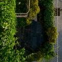 <p> Từ trên cao nhìn xuống, ban công nhà giống như một vườn nhiệt đới thu nhỏ, rậm rạp và xanh rì.</p>