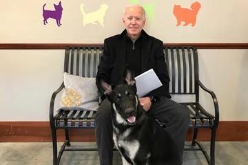 Biden ngã rạn xương khi chơi với thú cưng, phải đeo ủng y tế