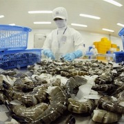 Xuất khẩu thủy sản năm 2020 có thể cán đích 8,6 tỷ USD