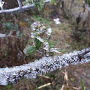 Những ngày tới miền Bắc tiếp tục rét đậm rét hại, nguy cơ xuất hiện băng giá