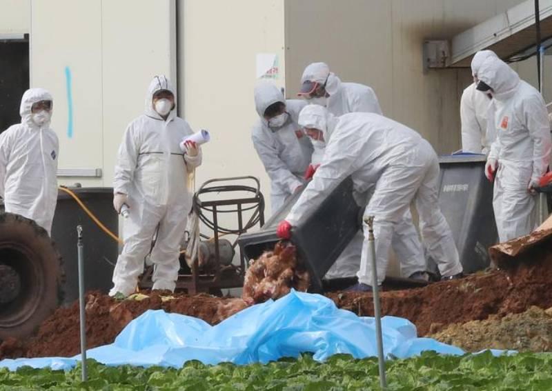 Thêm ca nghi mắc cúm gia cầm, Hàn Quốc lo ngại dịch bệnh lây lan