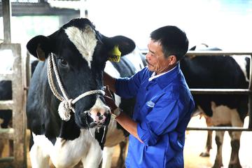 Mộc Châu Milk lên sàn giá 30.000 đồng/cp, định giá trên 2.000 tỷ đồng