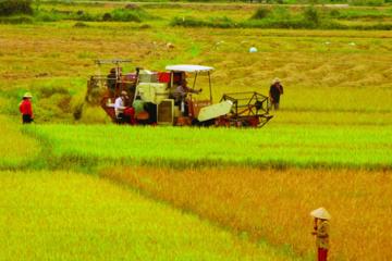Hơn 65 ha đất được chuyển đổi mục đích sử dụng