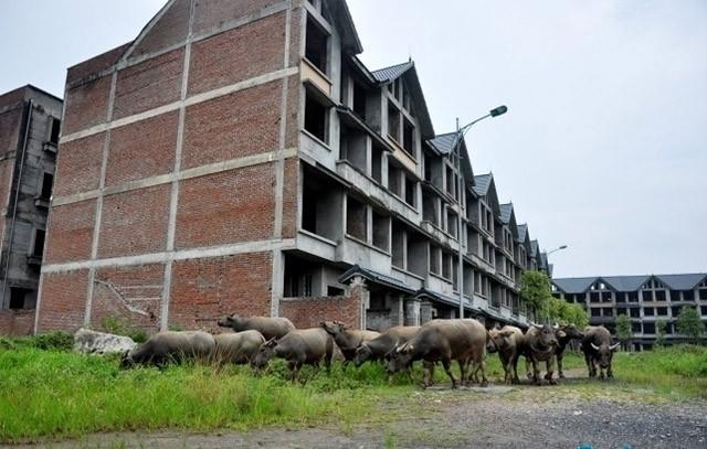 Bí thư Thành ủy Hà Nội yêu cầu không để xảy ra tình trạng 'bong bóng', 'thành phố ma' trong bất động sản. Ảnh: Một khu đô thị bỏ hoang nhiều năm ở huyện Hoài Đức, làm nơi thả trâu bò của người dân.