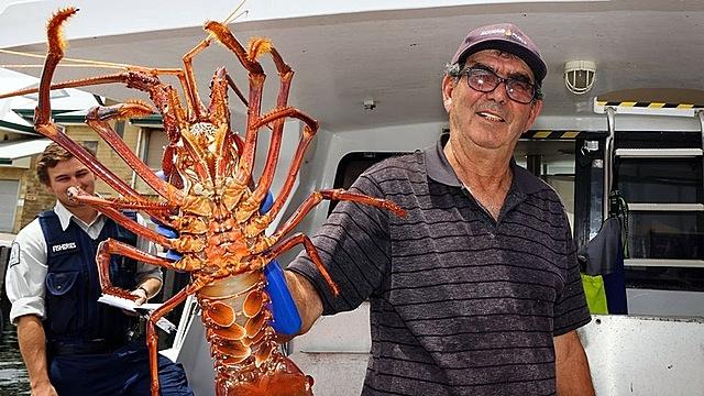 Ông Joe Paratore trưng bày con tôm vừa bắt được trong ngày với khách hàng tại bến cảng ở Fremantle. Ảnh: AFP.