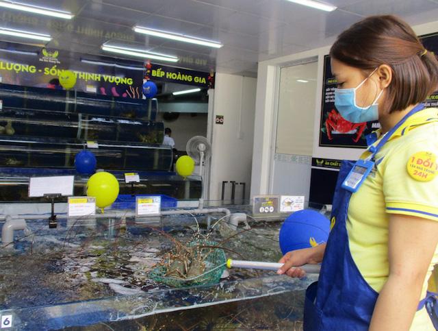 Tôm hùm tại một hệ thống bán lẻ ở TP HCM. Ảnh: Ngọc Ánh.