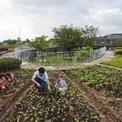 <p> Một vườn rau thử nghiệm đã được dựng lên, 5 loại rau khác nhau được trồng trong khu vườn rộng 200 m2 để phục vụ giáo dục nông nghiệp.</p>