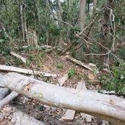 Bắt giam Chủ tịch công ty trong vụ phá 30.000m2 rừng để 'trồng rừng'