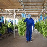 HAGL Agrico đặt kế hoạch doanh thu hơn 2.100 tỷ đồng năm 2021