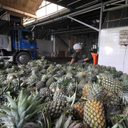 RCEP: Cơ hội phát triển chuỗi giá trị nông sản Việt ra thế giới
