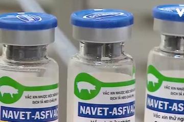 Việt Nam có vaccine ngừa tả lợn châu Phi từ quý II