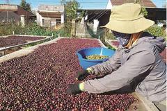 Xuất khẩu cà phê ngắm đích 6 tỷ USD vào 2030