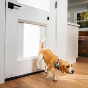 Cửa tự động thông minh dành cho thú cưng