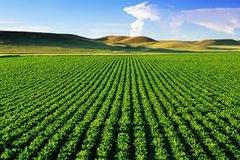 14 trường hợp được miễn, giảm thuế sử dụng đất phi nông nghiệp năm 2021