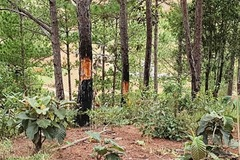 Chấm dứt hoạt động dự án sân golf và khu nghỉ dưỡng Đà Lạt