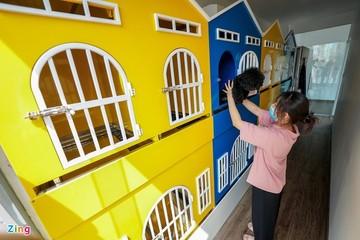 500.000 đồng/ngày gửi chó mèo ở 'khách sạn' dịp Tết