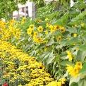 <p> Hoa tươi đủ các sắc màu cũng được bài trí vui mắt.</p>