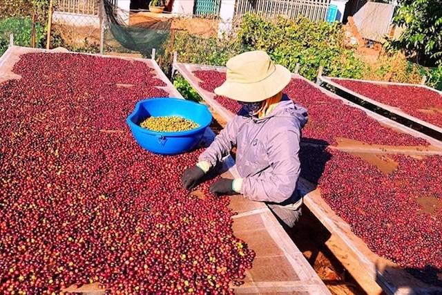 Dự báo xuất khẩu cà phê lạc quan trong năm 2021 vì sản lượng thế giới giảm