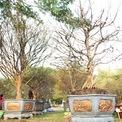 <p> Năm nay, do ảnh hưởng từ dịch Covid-19, chợ hoa xuân bày bán hoa, cây kiểng, gian hàng thương mại tại Phú Mỹ Hưng, quận 7, TP HCM cũng khiêm tốn hơn những năm trước. Các loại cây độc lạ, giá trị cao gần như không có. Riêng nhà vườn Phúc Gia đến từ Trà Vinh vẫn mang khoảng 30 cây mai vàng lên đây bán hoặc cho thuê. Hai cây mai có giá trị cao nhất vườn được đặt ở vị trí đẹp nhất, giá rao bán lần lượt 2,5 tỷ đồng và 2,2 tỷ đồng.</p>