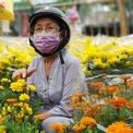 <p> Ngoài mai, các loại hoa cúc cũng được nhiều người lựa chọn để trưng trước cửa nhà, mang đi lễ chùa... Mỗi chậu cúc có giá khoảng 60.000 - 70.000 đồng.</p>