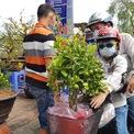 <p> Chậu tắc (quất) hiếm hoi được bán trên Bến Bình Đông. Nhà vườn chỉ có khoảng chục chậu, trái vẫn còn xanh, giá khoảng 120.000 - 150.000 đồng mỗi cây.</p>