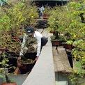 <p> Hoa được các nhà vườn chở trên thuyền lớn, bày ở tầng trên và chứa cả dưới khoang thuyền.</p>