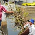 <p> Để vận chuyển một cây mai từ thuyền lên bến, người bán phải mất rất nhiều công sức, đòi hỏi sức khỏe và sự khéo léo, phối hợp nhịp nhàng.</p>