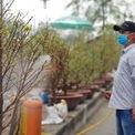 <p> Các chủ vườn phun nước mỗi ngày để cây được tươi dưới cái nắng của Sài Gòn.</p>