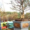 <p> Giá bán cây mai này được chủ vườn giới thiệu giá 1,1 tỷ đồng.</p>