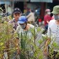 <p> Đầu giờ sáng ngày 27 Tết, nhiều người dân tại TP HCM đã tới lựa mua hoa, kiểng, một số đoạn đường chật kín gây tình trạng kẹt xe.</p>