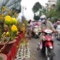<p> Mai vàng là loại phổ biến nhất ở Bến Bình Đông, cũng là cây được khách hàng chọn mua nhiều nhất.</p>