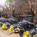 <p> Trâu ôm vàng cõng đào bích trên lưng là một trong những sản phẩm độc đáo được bày bán nhân dịp Tết Tân Sửu 2021 tại Hồ Tây, Hà Nội.</p>