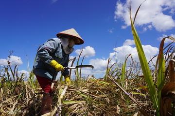 Việt Nam áp thuế chống bán phá giá đường nhập Thái Lan